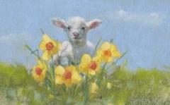 Lamb. 72