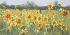 Sunflower Meadow. 72