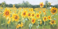Sunflower Meadow