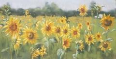 Sunflower Meadow. 72