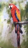 Macaw , Guatemala .